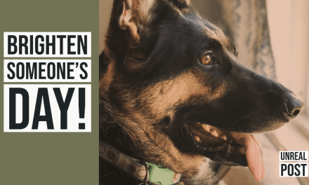 Watch this funny video of Sasha the German Shepherd as she triggers security camera and becomes an instant internet sensation.